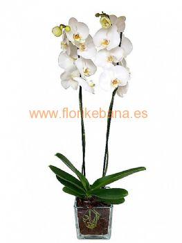 Planta orquidea con macetero de cristal